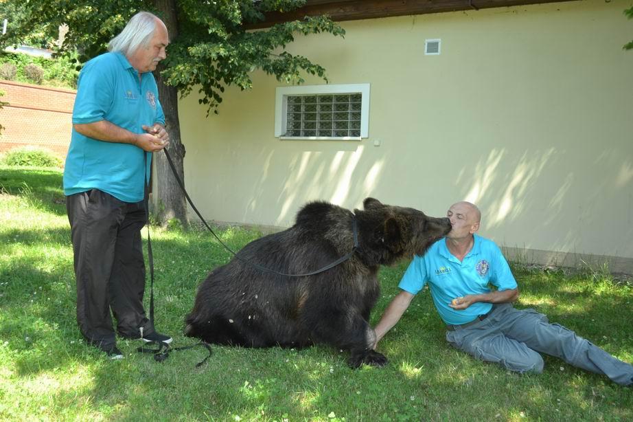 Setkání s medvědy