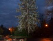 Rozsvěcení_stromu
