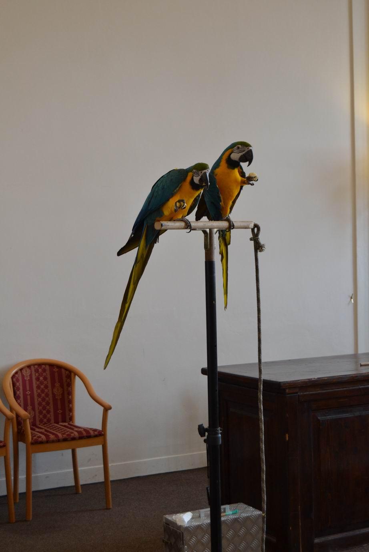 Návštěva papoušků