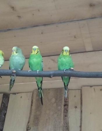 Otevření ptačí voliéry