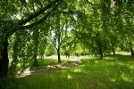 vzrostlé stromy parku